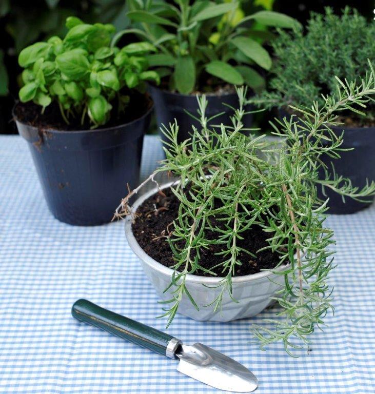 come profumare la casa con erbe naturali (1)